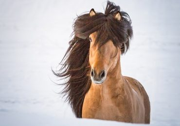 Pferd Andvari im Oedhof Bayern