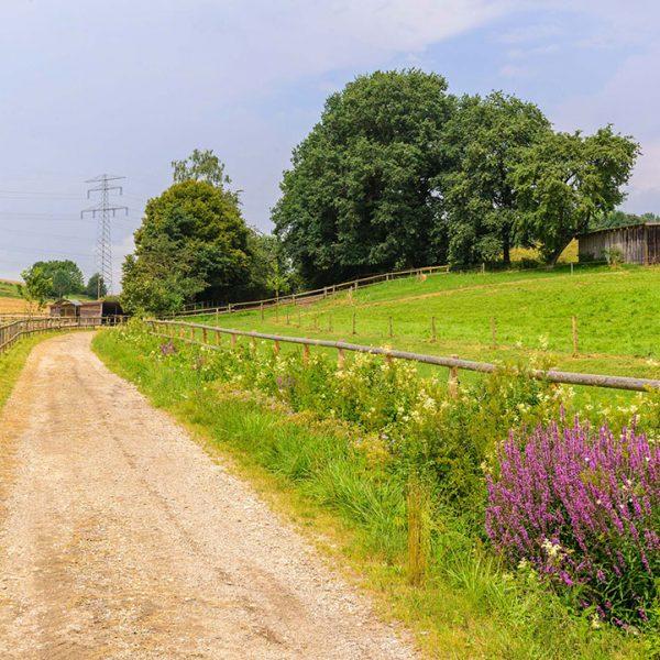 Landschaft Pferdehof Bayern Oedhof