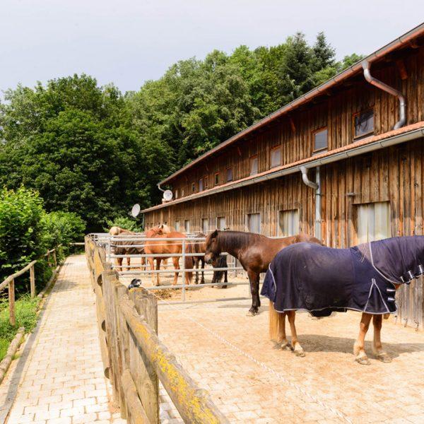 Pferdestall Bayern Oedhof