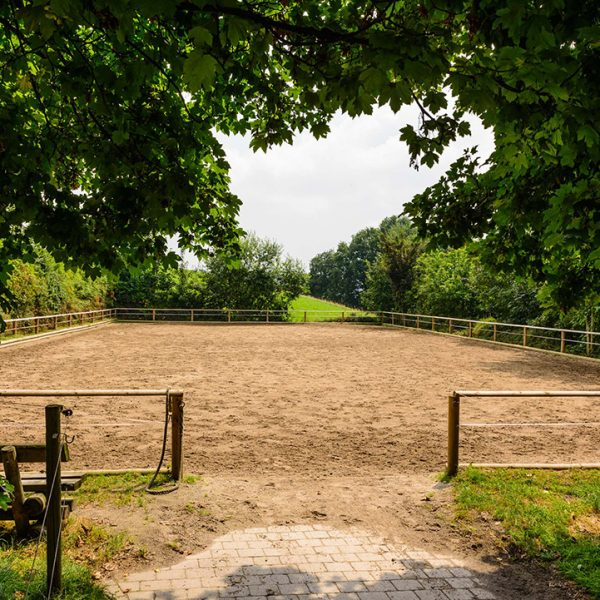 Pferde Dressur Bayern Oedhof