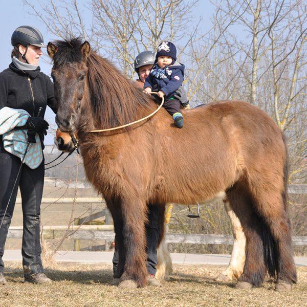 Pferde Ausbildung Bayern