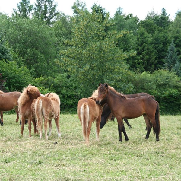 Pferde Pferdehof Oedhof Bayern