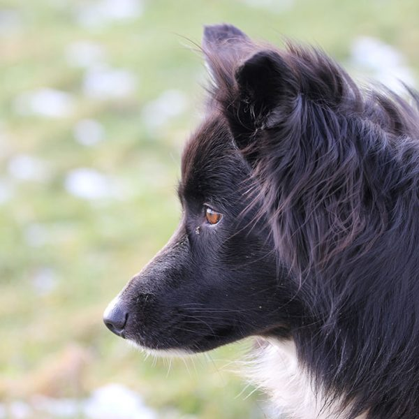 Hund im Oedhof Bayern